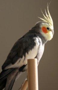 My Sunny Bird